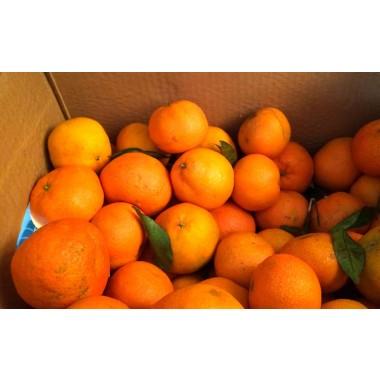 Gabys Grüner Garten Orangen Balsamico 250ml
