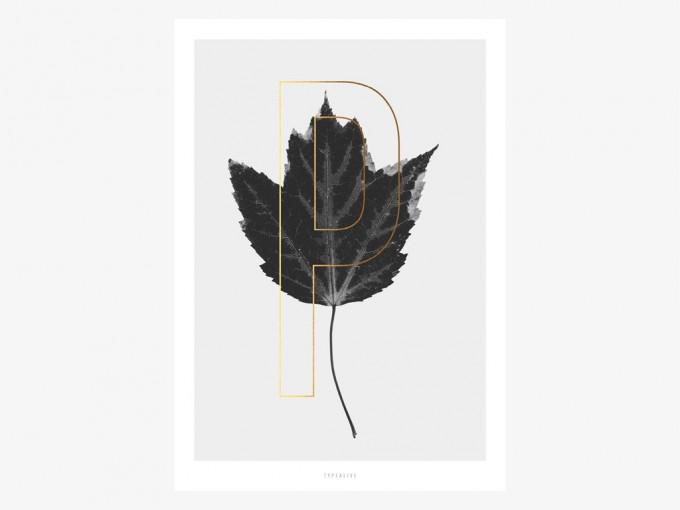 typealive / ABC Plants - P