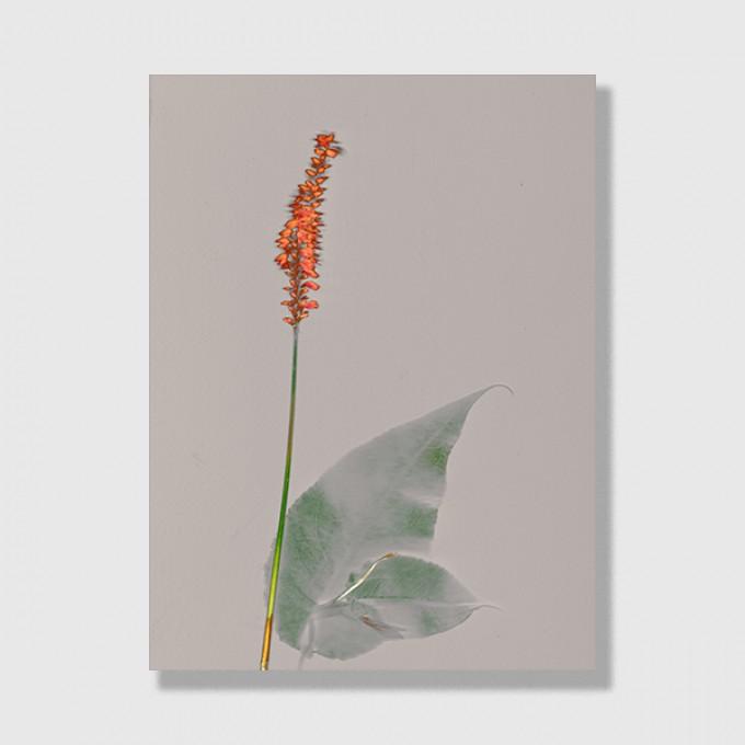 """ZEITLOOPS """"Floralis I"""", Posterprint 30x40 cm"""