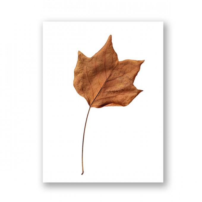 """ZEITLOOPS """"Herbst"""", Fineartprint, 45x60 cm"""