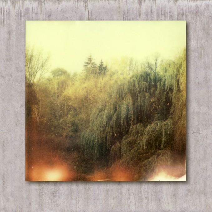 Fotografie // Wald 1.0 // Lars_Plessentin