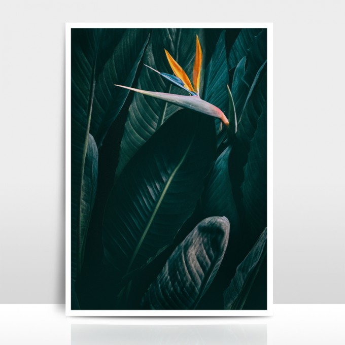 "Amy & Kurt Berlin A3 Artprint ""Bird of paradise"""