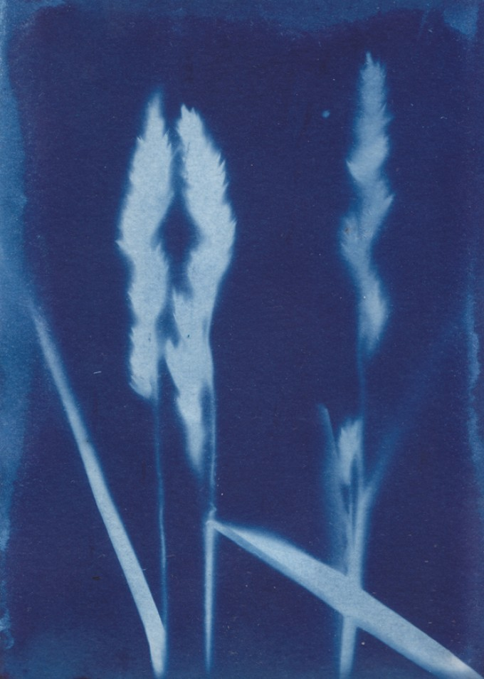 Anka Büchler, Floraler Blaudruck,Cyanotypie, Unikat, A6, Motiv 15