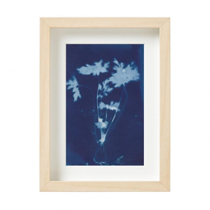 Anka Büchler, Floraler Blaudruck, Cyanotypie, Unikat, A6, gerahmt, Motiv 12