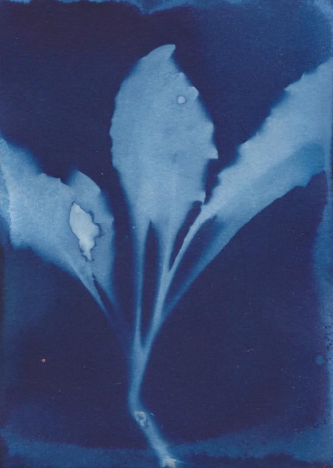Anka Büchler, Floraler Blaudruck,Cyanotypie, Unikat, A6, Motiv 2