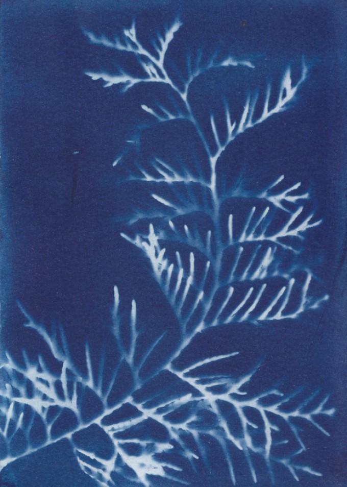 Anka Büchler, Floraler Blaudruck,Cyanotypie, Unikat, A6, Motiv 6