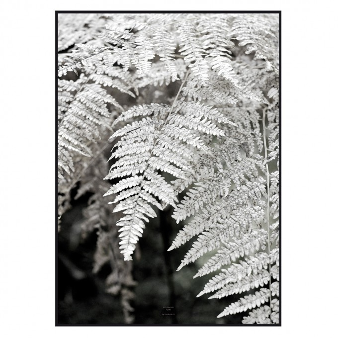 na.hili Let´s dive into FERN  - A1 Artprint - Poster