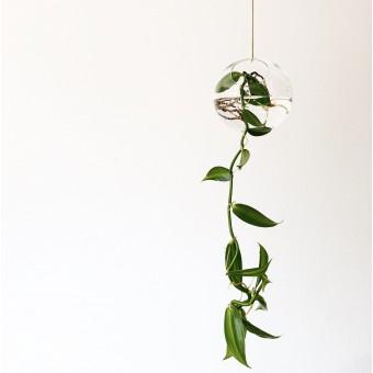 Hausjungle - hängende Glasvase mit Gewürzvanille, Vase, Glasbommel, Dekoglas, Pflanze
