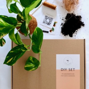 Kokedami DIY Set inkl. Überraschungspflanze
