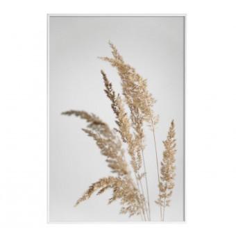 """nahili ARTPRINT / POSTER """"golden PAMPAS grass"""" Natur -Fotografie (DIN A1/A3 & 50x70cm)"""