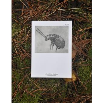 Kaltnadel-Insekten-Postkartenset »Insectopädie II«