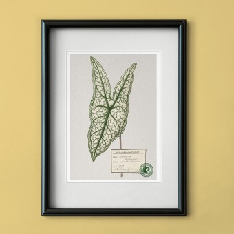 "Hey Urban Monkey - A4 Poster - ""Caladium Belleymel"""