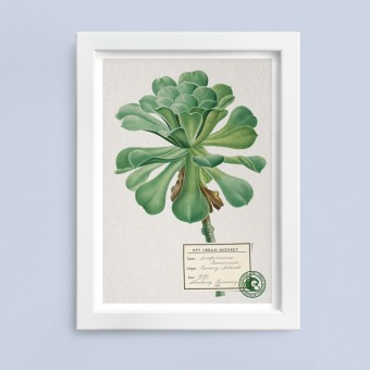 "Hey Urban Monkey - A4 Poster - ""Sempervivum Canariense"""