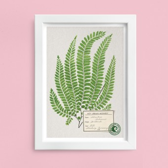 "Hey Urban Monkey - A4 Poster - ""Adiantum Pubescens"""