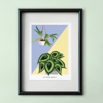 "Hey Urban Monkey - A4 Poster - ""Begonia/Staghorn"""