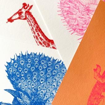 Risographie Postkarten – WUNDERTÜTE TIERE  – HERR & FRAU RIO