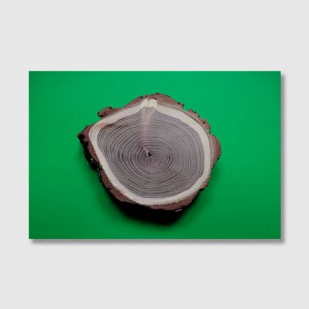 """ZEITLOOPS """"Jahresringe, grün"""", Fineartprint 40x60 cm"""