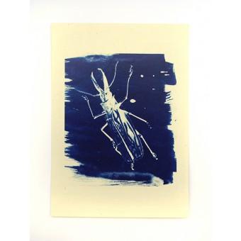 Postkartenset Cyanotypie Scarabaeus von playfulsolutions