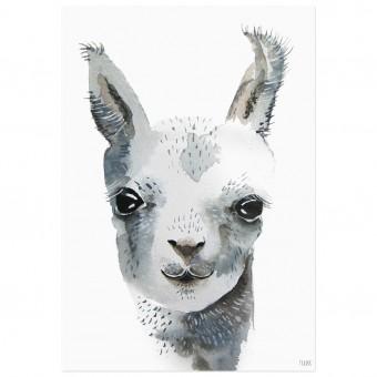 nuukk Lama-Poster (Din A4)