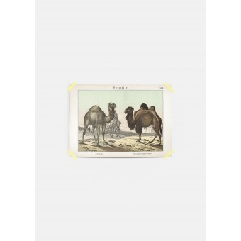 JOE MANIA / Vintage Artprint Poster / Schubert - Wiederkäuer 18