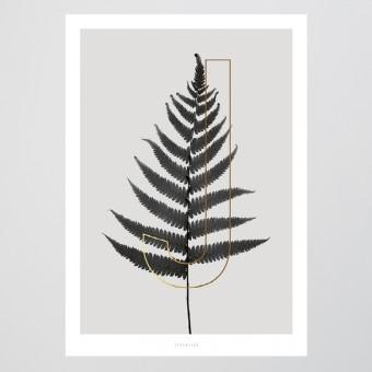 typealive / ABC Plants - J