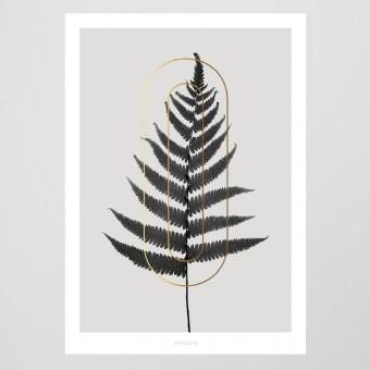 typealive / ABC Plants - O