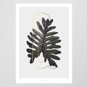 typealive / ABC Plants - &