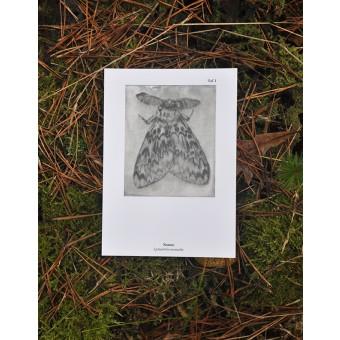 Kaltnadel-Insekten-Postkartenset »Insectopädie I«