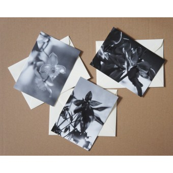 Anna-Katharina Ledwa Postcards Black And White