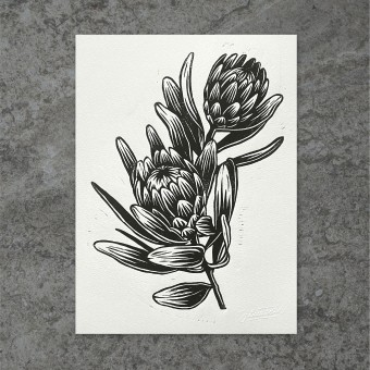 Juliana Fischer - Protea - Linoldruck, schwarz, 22,8 x 30,6 cm