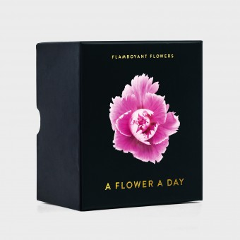 A Flower A Day – Flamboyant Flowers