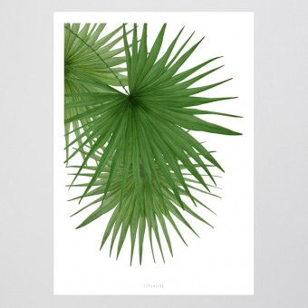 typealive / Tropical No. 3