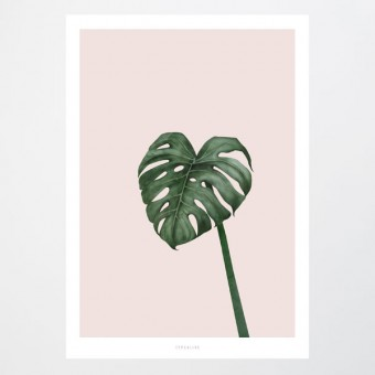 typealive / Tropical No. 10