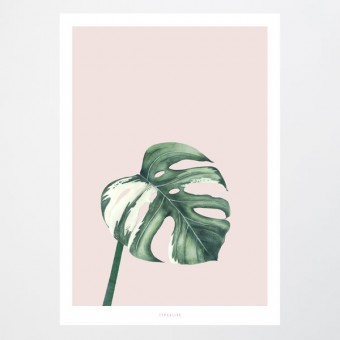 typealive / Tropical No. 11