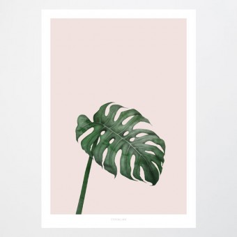 typealive / Tropical No. 7