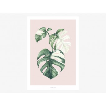 typealive / Tropical No. 4