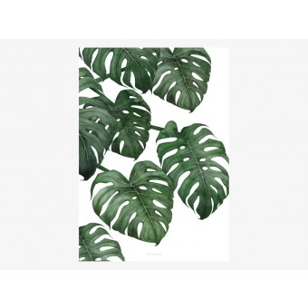 typealive / Tropical No. 6