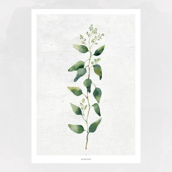 designfeder | Poster Pflanze No.2