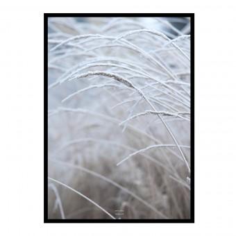"""nahili ARTPRINT / POSTER """"white & calm"""" Gräser Fotografie (DIN A1/A3 & 50x70cm)"""