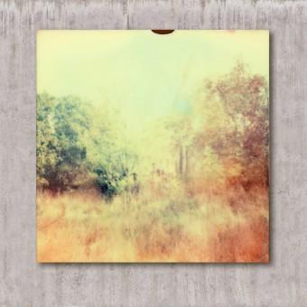 Fotografie // Wald 3.0 // Lars_Plessentin