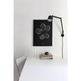 Coco Lapine Design Calathea Roseopicta