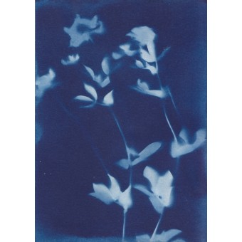 Anka Büchler, Floraler Blaudruck,Cyanotypie, Unikat, A6, Motiv 8