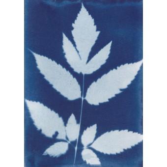 Anka Büchler, Floraler Blaudruck,Cyanotypie, Unikat, A6, Motiv 11