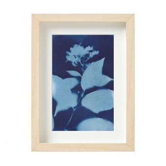 Anka Büchler, Hortensie, Blaudruck,Cyanotypie, Unikat, A6, gerahmt, Motiv 16