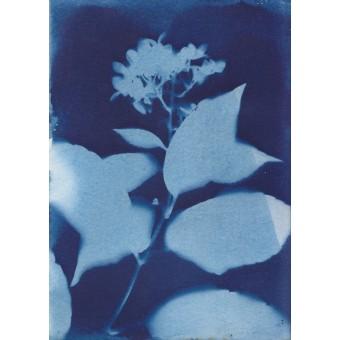 Anka Büchler, Floraler Blaudruck,Cyanotypie, Unikat, A6, Motiv 16