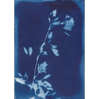 Anka Büchler, Floraler Blaudruck,Cyanotypie, Unikat, A6, Motiv 1