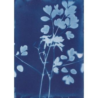 Anka Büchler, Floraler Blaudruck,Cyanotypie, Unikat, A6, Motiv 20