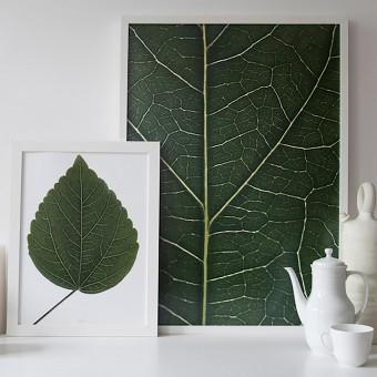 "nahili ARTPRINT / POSTER ""look real close HIBISCUS - detail green leafe"" (DIN A1/A3 & 50x70cm) Blatt Botanic Fotografie"
