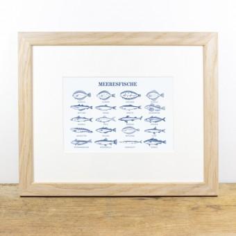 Bow & Hummingbird Bild mit Echtholzrahmen - Meeresfische