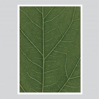 na.hili look real close HIBISCUS - green Artprint A3, 50x70, A1 Poster